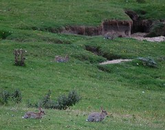 How many can you spot? (monika & manfred) Tags: nature out holidays islay mm florafauna animalsplants scotland2007 islaynature