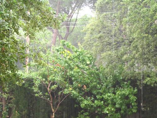 Un dia de pluja