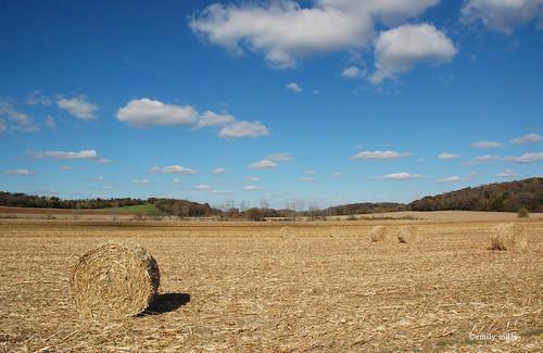 Autumn hay