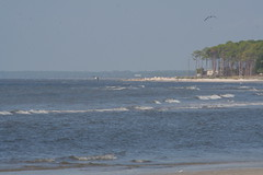 Family_Alligatorpoint_20101024_118 (dougflyer) Tags: familybeach