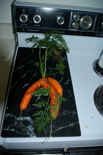 2010-11-16 Fresh carrott from garden