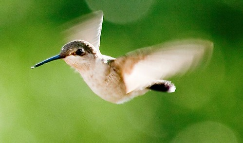 Hummingbird, Hummingbird