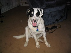 Harley the dog