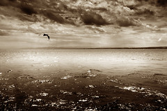 Unlimited (Martin Gommel) Tags: above light sky blackandwhite bw cloud seascape bird nature water sepia night clouds germany dark landscape freedom fly flying blackwhite high day conversion free bodensee depth insight breaking squeaker daynight burd magiclight
