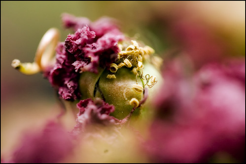 flowers fall into seed