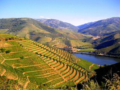 Nature's Peace (Sandra_R) Tags: portugal nature water field river landscape outdoors photography exterior seasons natural background rustic nobody foliage douro agriculture landforms naturalworld clearsky trásosmontes purity nationalsymbols ruralscenes hillsandmountains agriculturalfields croplands mywinners