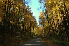 Great Smoky Mountains (Motty Chen) Tags: greatsmokeymountains