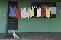 Co das cores (Vic Samp) Tags: street city brazil urban dog chien green co wall composition puppy mt view line clothes laundry cachorro clothesline rule washing matogrossodosul thirds varal roupas lucasdorioverde vicsamp