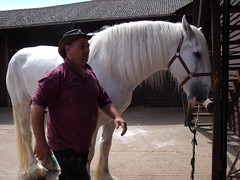 Dorset Heavy Horse Centre (rachelj1968) Tags: horses shire heavyhorses drafthorses dorsetheavyhorsecentre heavyworkinghorses
