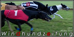 Greyhounds-Dogs-Final - GP v Beringen 2010