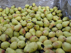 Pumpkin Patch (pete4ducks) Tags: autumn fall fruit oregon portland island pears pumpkinpatch 2010 sauvieisland