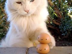 009-3 (mmrified) Tags: arizona cats white cute cat toy toys japanese tucson az kawaii onsen neko kun manju whitecats plastictoys japanesetoys charmmykitty charmmy rubbertoys onsenmanjukun