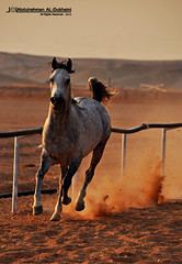 ..II Horse II.. (Abdulrahman AL-Dukhaini || ) Tags: nikon 200 18 2010  d90    abdulrahman   platinumphoto lens18200mm   aldukhaini