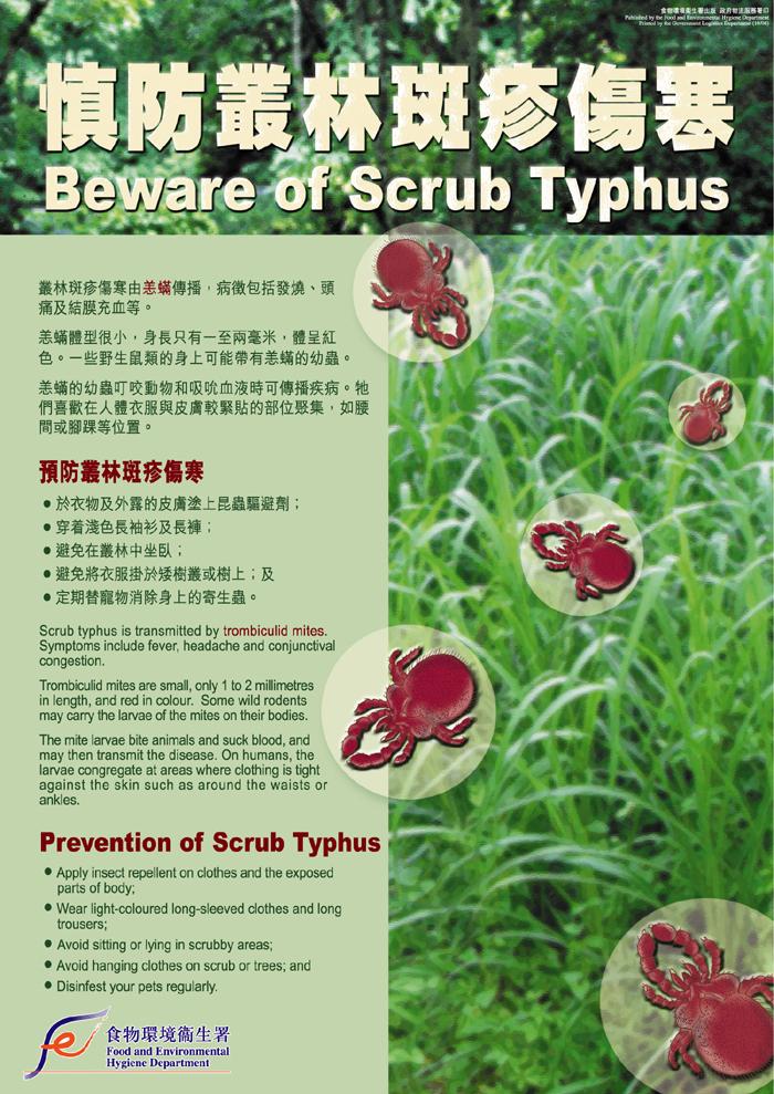 scrub typhus_poster