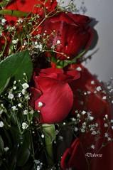 due rose (Debora Matteis) Tags: red rose rosa rosso mazzo fiorellini bunchofroses