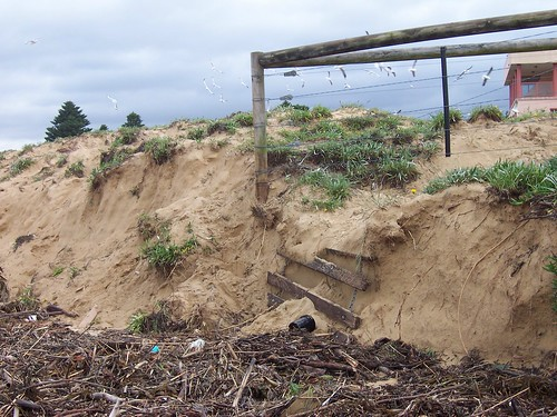 Dune damage Ocean Beach Umina