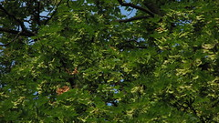 Parcul Central - Bistrita (bortescristian) Tags: park city morning trees light summer sky colour tree verde green home nature leaves sunshine june brad canon town is photo leaf oak pin ray branch colours foto fotografie natural branches picture natura romania tulip transylvania leafs s3 parc transilvania cristian iunie 2007 poza vara bistrita copac cer soare dimineata copaci oras culori frunze frunza canons3 culoare lalea s3is canons3is mesteacan ramuri bortes ramura stejar bortescristian nasaud artar birchsun
