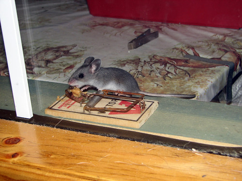 Need A Better Mousetrap