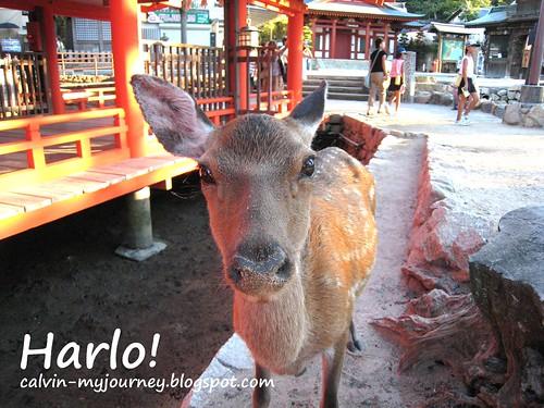 Harlo!