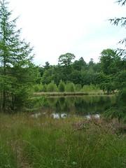 Bos meertje. (thea de lange) Tags: wood lake nature meer nederland natuur fotos bos mijn eigen