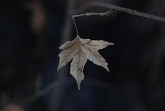 The Last Leaf will never fall (foto door: Behrooz Nobakht)