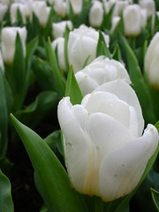 DSCN2454 (Penguinmo - ma vie, mes photos) Tags: flower hongkong flowershow