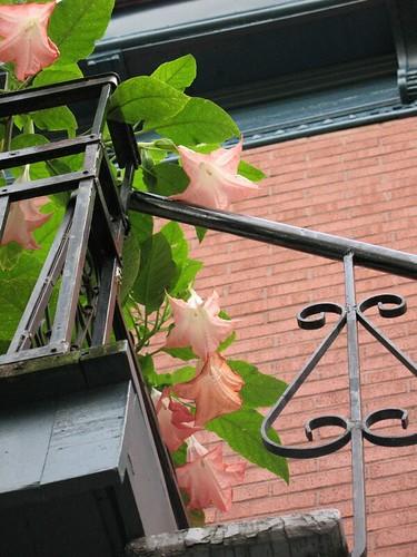 Une couleur: briques et fleurs