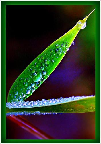 Our Garden Berlin: leafs + waterdrops 12.832.27
