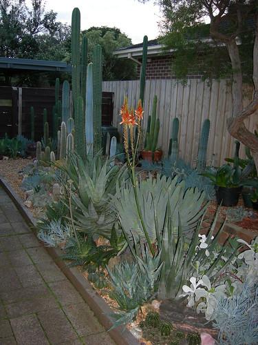 My C+S garden 4611176134_cee4798ca5