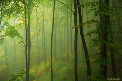 gift for my soul (.:: Maya ::.) Tags: wood autumn mist mountain eye fall nature landscape maya outdoor magic bulgaria  beech  rodopi  rhodope  mayaeyecom mayakarkalicheva  wwwmayaeyecom