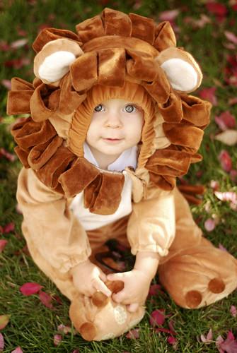 cuddley lion