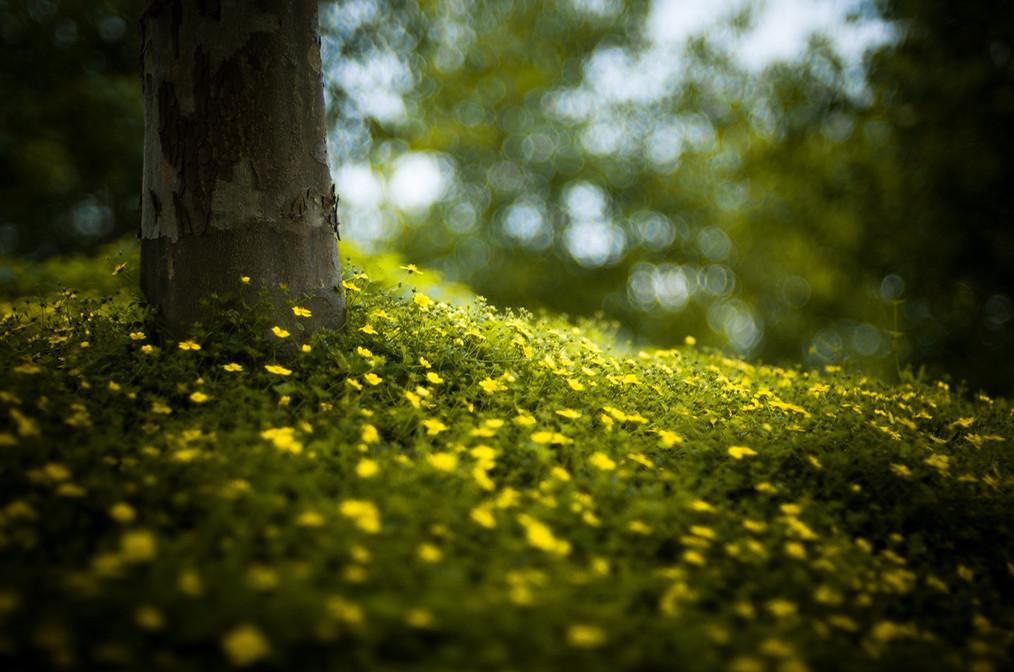 entre amarillos