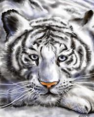 (dana fodor) Tags: drawing whitetiger