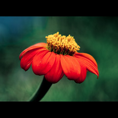 I Stay Away (Front Page) (Danny Yao) Tags: blue red flower green yellow chains nikon bokeh alice away danny f28 stay yao 105mm d80 bokehhearts