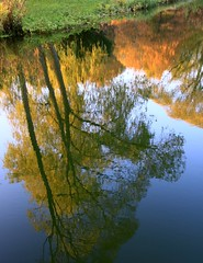 Mirror in a pond (:Linda:) Tags: autumn reflection tree water germany pond village upsidedown herbst thuringia teich autumnal herbstlich brden tree