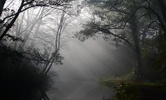 Sunbeams (John Spooner) Tags: sunlight mist canal hampshire sunbeam shaft basingstokecanal dogmersfield