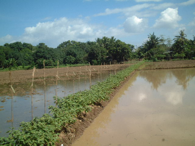 Calumpit Philippines  City new picture : Farm Land in Calumpit, Bulacan, Philippines
