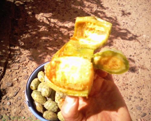 Figues de Barbarie هندية فاكهة الصبّار