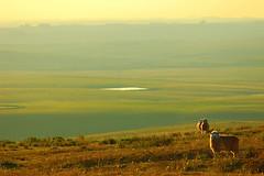 De ovelhas e horizontes - by Eduardo Amorim