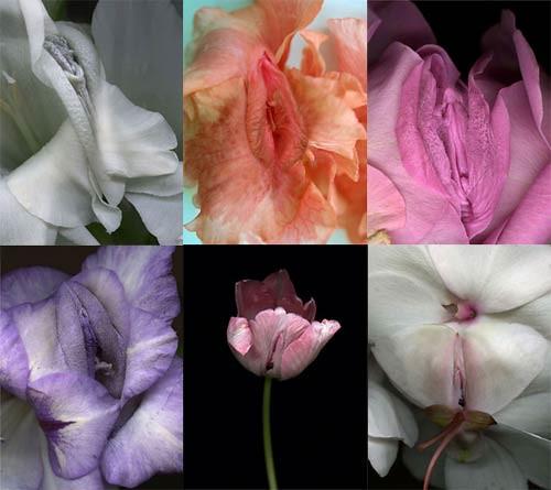эротические цветы фото: