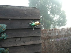 Bug on the Shared (AussieSusan from TurtleTravelTales) Tags: wood morning wild mist cold colour green wet wonderful garden real fly duck spring bush friend warm place magic shed australian peaceful best lizard change growing comfort bridgetown bueatiful