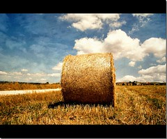 (70) Tags: summer sky texture nature field clouds landscape nuvole colours estate framed sony grunge harvest straw cielo verano haystack bale hdr rolling haybale paesaggio grano bica fieno covone strohballen rotoballa rotolando myriam70 gigilivornosfriends