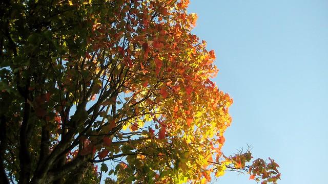2010-10-15 fall 003