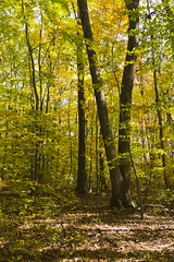 William Mitchell State Park - Cadillac Michigan (Viper1953) Tags: statepark park autumn fall leaves michigan fallcolors cadillac