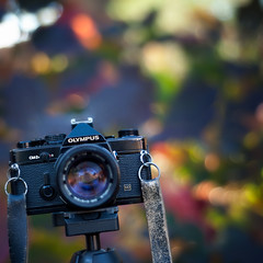 300/365: Vintage Camera & Autumn Bokeh! (pixelmama) Tags: slr 35mm october bokeh filmcamera 2010 olympusom2n project365 hbw bokehwednesday 3652010 wellwornstrap