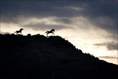 Mustang Silhouette (Crickontour) Tags: sculpture usa clouds sunrise dawn washington canon20d mustang i90 vantage centralwashington wildhorsemonument canon70200f28l davidgovedare