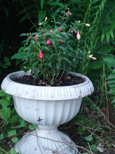 Much Happier Fuchsia
