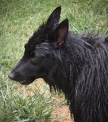 Bath Day (Warchild) Tags: bath shelby janine
