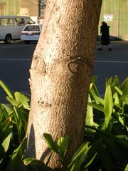 Tree trunk and agapanthus (mindymiss) Tags: leaves treetrunk agapanthus kilbirnie