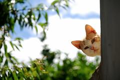 La curiosidad mató al gato by Perolo Orero